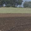 Salerno – Agricoltura in crisi per la siccità, crollo della produzione ed aumento del costo dei foraggi