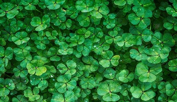 premio passione verde